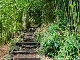 Bamboo Way