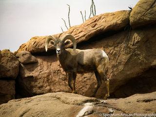 Desert, Museum, Sonoran, AZ, nature
