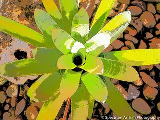 plant, stone, nature